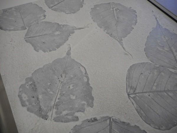 オルトレマテリア OLTREMATERIA 葉っぱを浮き上がらせたサンプル