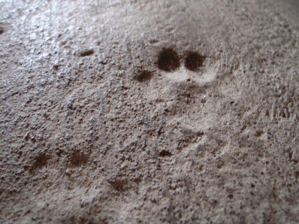 モルタルに猫の足跡仕上げ?