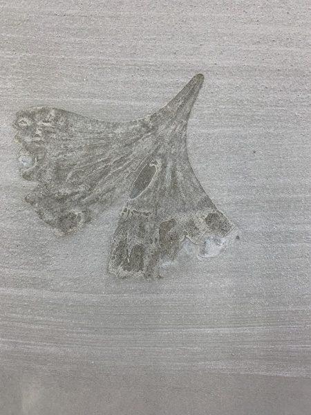 モルタル葉っぱ模様転写。イチョウの葉
