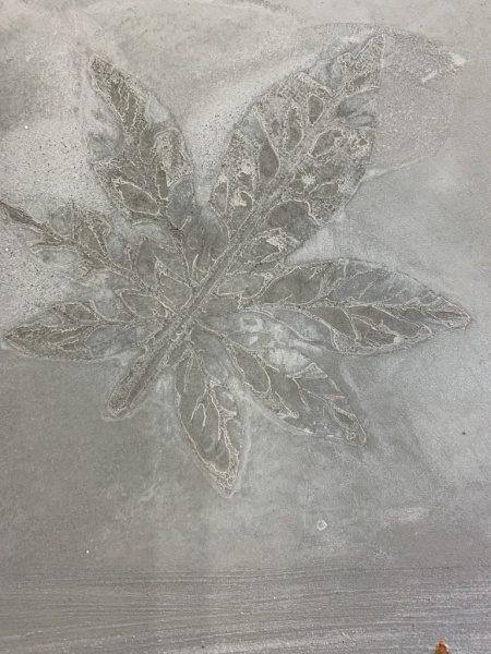モルタル葉っぱ模様転写。カエデの葉