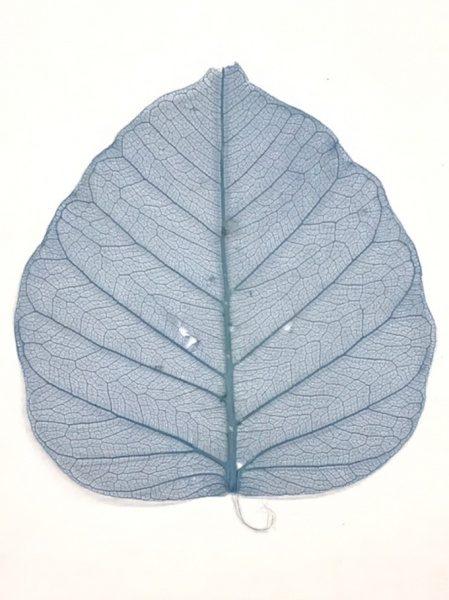 葉脈が透けている色付きの葉っぱ。ブルー